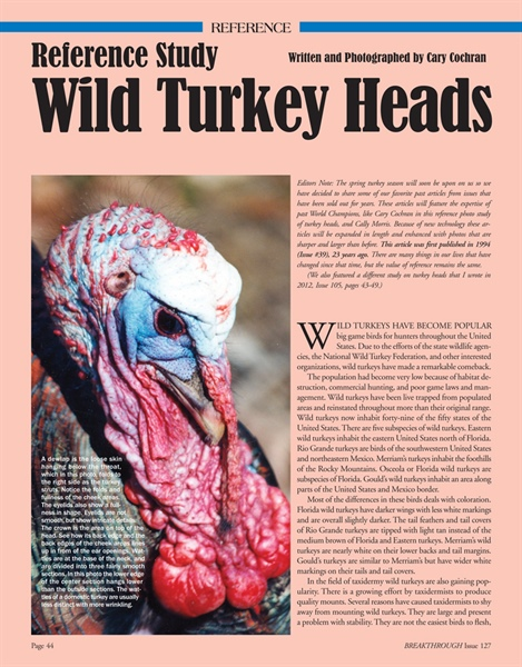 Reference Study: Wild Turkey Heads