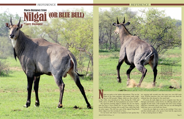 Reference Study: Nilgai or Blue Bull