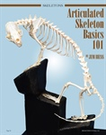 Articulated Skeleton Basics