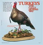 Turkeys: The Cally Morris Way