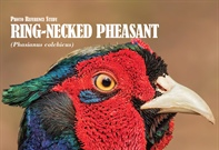 Reference Study: Ring-necked Pheasants