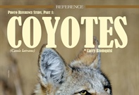 Reference Study: Coyotes, Part 1