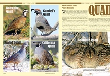 Reference Study: Quail
