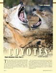 Reference Study: Coyotes, Part 2