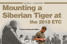 Mounting a Siberian Tiger at the 2018 ETC