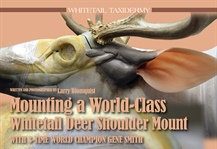 Mounting a World-Class Whitetail Deer Shoulder Mount, Part 3