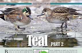 Waterfowl Reference Study: Teal, Part 2