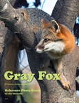 Reference Study: Gray Fox