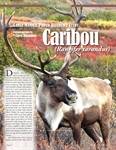 CARIBOU (Rangifer tarandus) Large Mammal Photo Reference Study