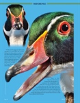 Reference Study: Wood Ducks