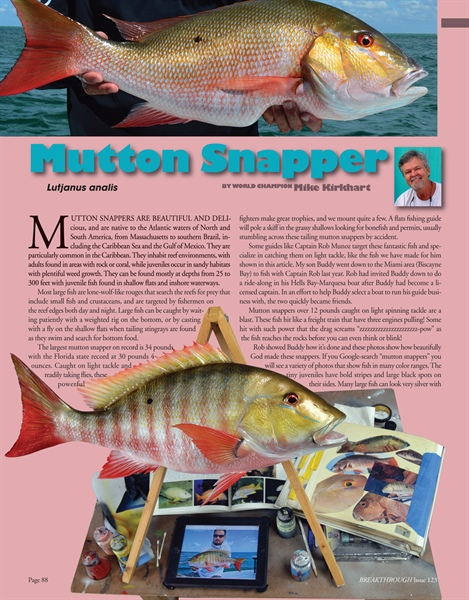 Painting Schedule: Mutton Snapper
