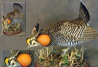 Mounting a Prairie Chicken with Eugene Streekstra