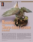 Mounting a Sharp-Tailed Grouse