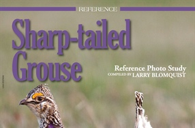REFERENCE: Sharp-Tailed Grouse